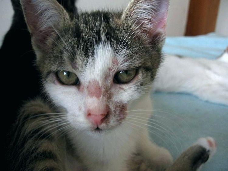 Как избавиться от кошачьей шерсти на одежде